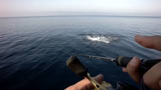 BLUEFIN TUNA near the Shore! (video)