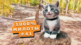 Милые маленькие питомцы #41 Cute little animals