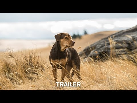 Bella Film Hund