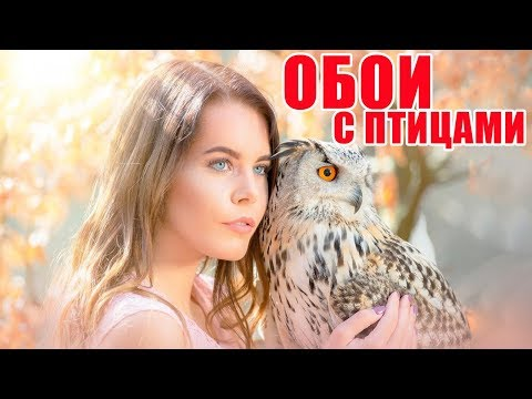 Обои с птицами в интерьере | Wallpaper with birds in the interior