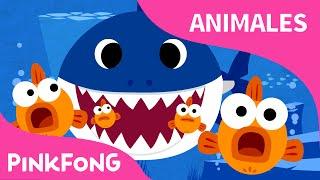 Tiburón Bebé | Animales | PINKFONG Canciones Infantiles