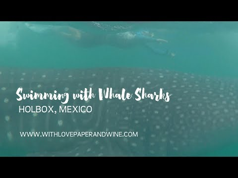 Swimming with whale sharks in Isla Holbox, México
