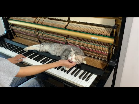 Always with me piano massages for meow - OST Spirited Away (Studio Ghibli)