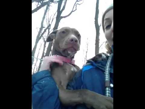 Mocha, an adopted Pit Bull Terrier Mix in Rockaway, NJ