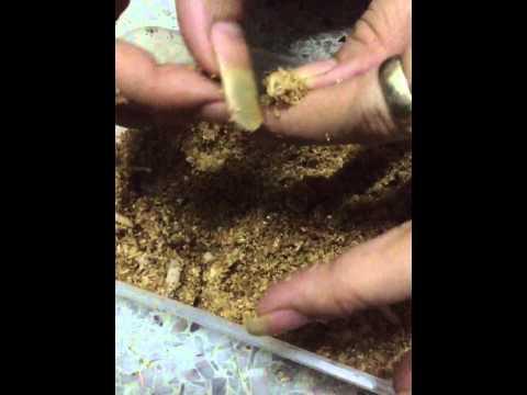 Flaxseed และปรสิต