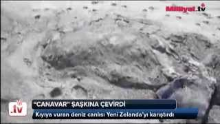 Canavar şaşkına çevirdi  İzle _ Dünya _ Milliyet.tv