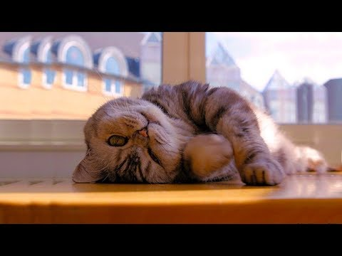 AMAZING ! Cats Sleeping With Eyes Open  |  FUNNY Pets Compilation