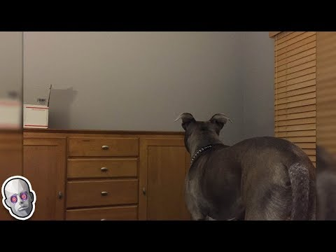 5 Dogs That Saw Something Their Owners Couldn't See