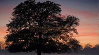 Winterwood - don mclean