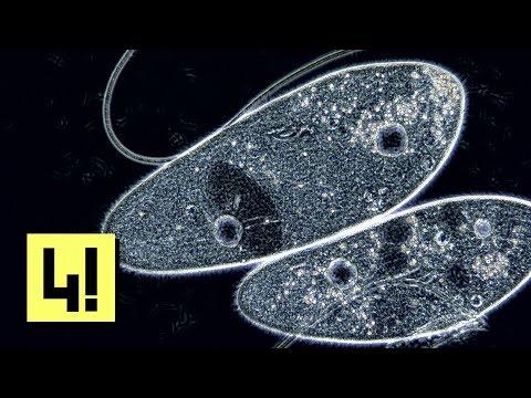 Milyen gabonákat lehet enni a paraziták tisztításakor