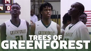 Trees of Greenforest Basketball