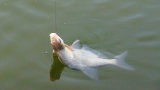 Платники рыбалка в челябинской области