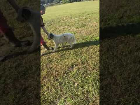 Kat doing a little training