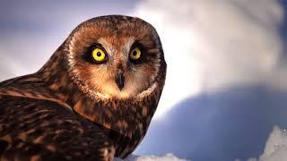 Acres for Owls - Help save endangered Owls!