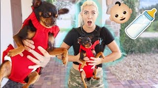 Treating my Dog like a BABY for 24 hours | NICOLE SKYES