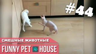 СМЕШНЫЕ ЖИВОТНЫЕ И ПИТОМЦЫ #44 МАРТ 2019 [Funny Pet House] Смешные животные