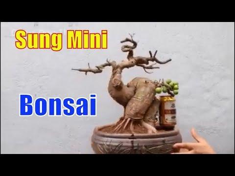 Top 10 Cay Sung Bonsai Mini Dep Nhat 2019 Thuy Garden