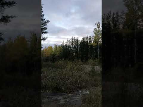 Hunter records mysterious, echoing howl in the Northern Ontario woods