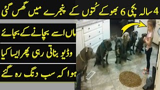 Girl Fed 6 Dogs and Her Mother Was Making a Video
