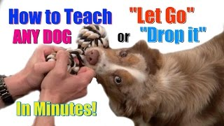 "How to Teach ANY DOG ""Drop it"" / ""Let Go"" in Minutes!"