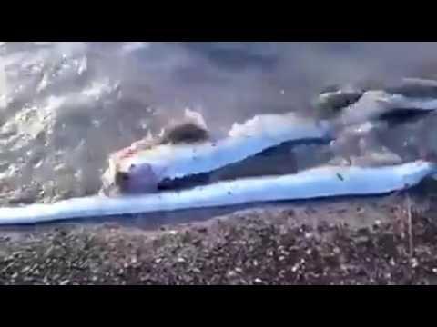 fahribakir687's Video 141103198487 stkr4AEE4c0