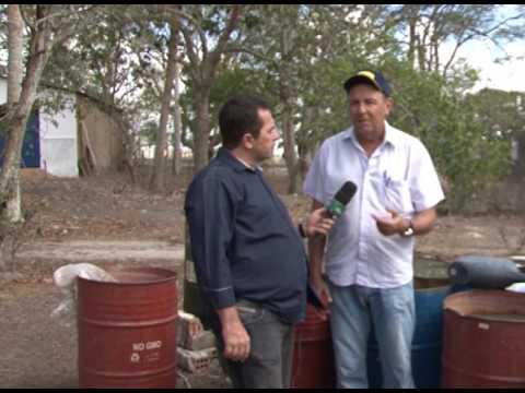 Produção de milho hidropônico - Parte 3