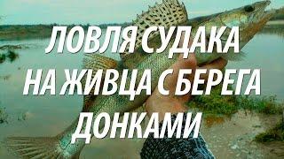 ЛОВЛЯ СУДАКА НА ЖИВЦА С БЕРЕГА С НОРМУНДОМ ГРАБОВСКИСОМ