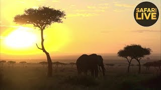 safariLIVE - Sunrise Safari - September 23, 2018