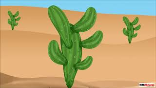 Class 4 Science - Chapter Adaptations in Plants | Plants Adapted to Deserts