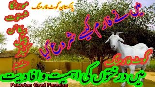 Successful GOat Farming | Goat Farming by Pakistan Goat