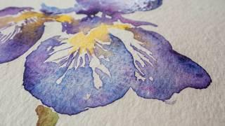 Watercolour Lesson: Paint an Iris flower with Angela Fehr