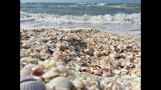 Best Beach for Shells -  Sanibel and Captiva lslands Florida