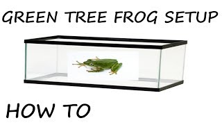 How to Setup a Green Tree Frog Enclosure
