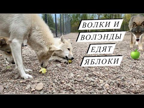 eugenewolflambert's Video 168751443782 subu06S_hN0