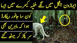 A Hidden Camera Was Placed in the Amazon Forest and It Recorded a Different Specie of Animals