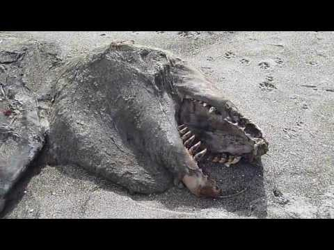 Sea Creature Carcass Washes Ashore in New Zealand