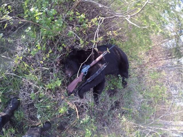 Gildas's big bear 2015
