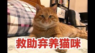 生日礼物竟是救助一只被弃养半年的猫咪,拐骗流浪橘猫回家割蛋蛋!