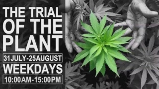 Trial Of The Plant, Day 6 - Dagga Couple - Streamed live from PTA, 7 Aug 2017.