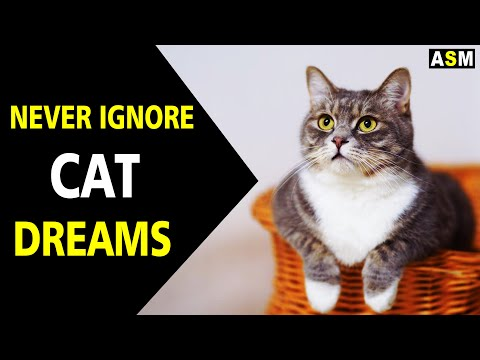What does cat dream meaning | Dream interpretation |