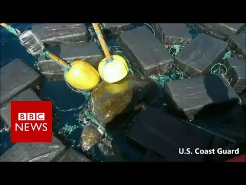 Sea turtle found tangled in floating cocaine bales – BBC News