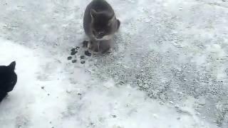 Котопёс!