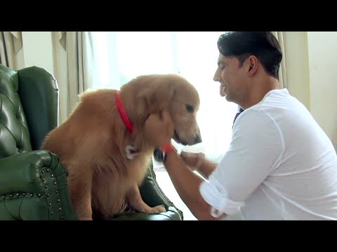 Every Dog Has It's Day - Entertainment Behind the Scene Making