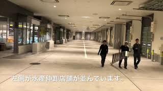 開場間近!豊洲新市場ターレーで走る!