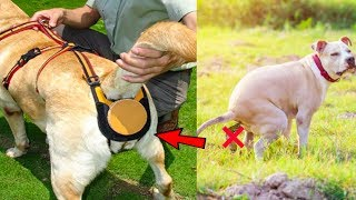 5 NEW DOGS GADGETS INVENTION YOU MUST HAVE ▶ If You Have Any Puppies