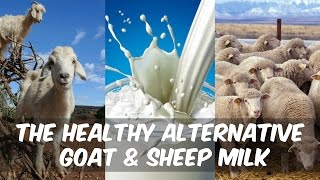 Healthy Dairy | Goat Cheese Vs. Cow Cheese? - Thomas DeLauer