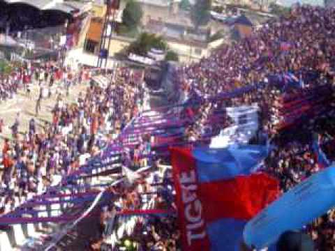 """Tigre mi buen amigo"" Barra: La Barra Del Matador • Club: Tigre"