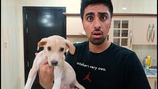 WE GOT A PUPPY !!! *NOT CLICKBAIT*