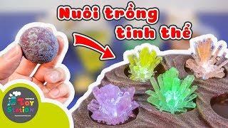 Lần đầu nuôi trồng Tinh Thể, bộ Kit Mega Crystal Growing từ National Geographic ToyStation 245