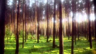 Ой сосонка літом і зимой зелена - Млада